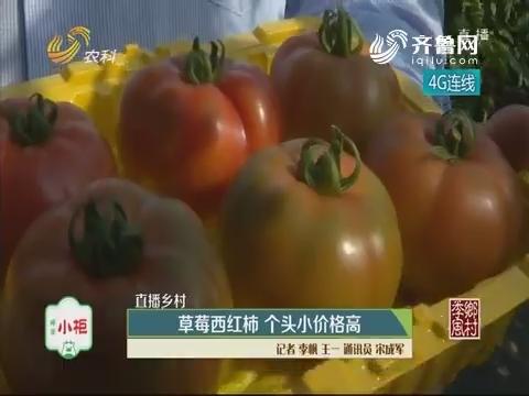 【直播乡村】草莓西红柿 个头小价格高