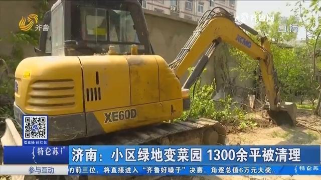 济南:小区绿地变菜园 1300余平被清理