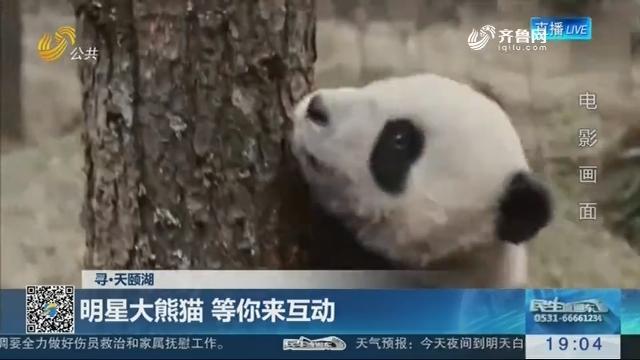 【寻·天颐湖】明星大熊猫 等你来互动