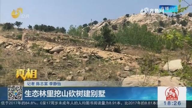 【真相】临沂:生态林里挖山砍树建别墅