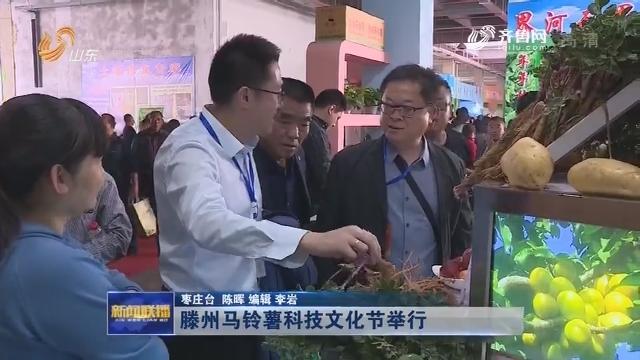 滕州马铃薯科技文化节举行