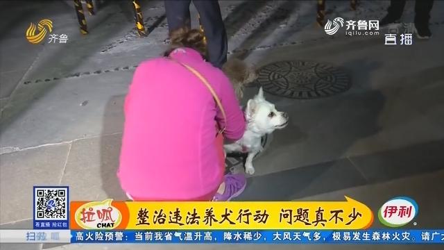 济南:整治违法养犬行动 问题真不少