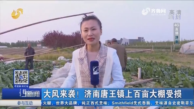 【4G直播】大风来袭!济南唐王镇上百亩大棚受损