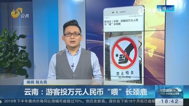"""【新说法】云南:游客投万元人民币""""喂""""长颈鹿"""