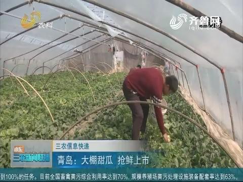 【三农信息快递】青岛:大棚甜瓜 抢鲜上市