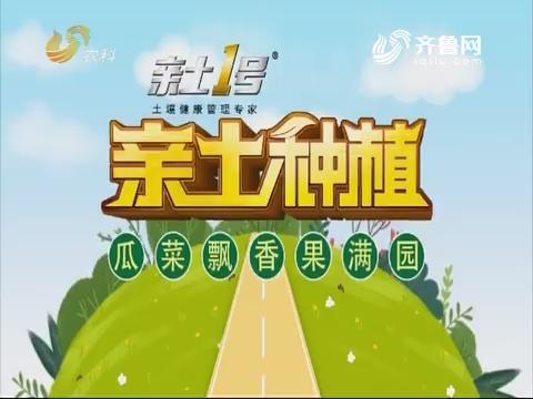 2019年04月19日《亲土种植·瓜菜飘香果满园》完整版
