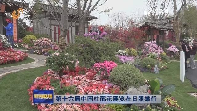 第十六届中国杜鹃花展览在日照举行