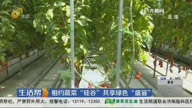 """寿光:相约蔬菜""""硅谷""""共享绿色""""盛宴"""""""