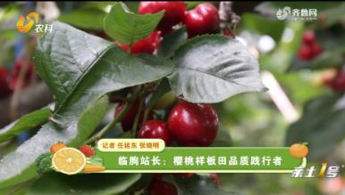 临朐站长:樱桃样板田品质践行者