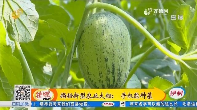 揭秘新型农业大棚:手机能种菜