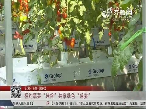 """寿光:相约蔬菜""""硅谷"""" 共享绿色""""盛宴"""""""