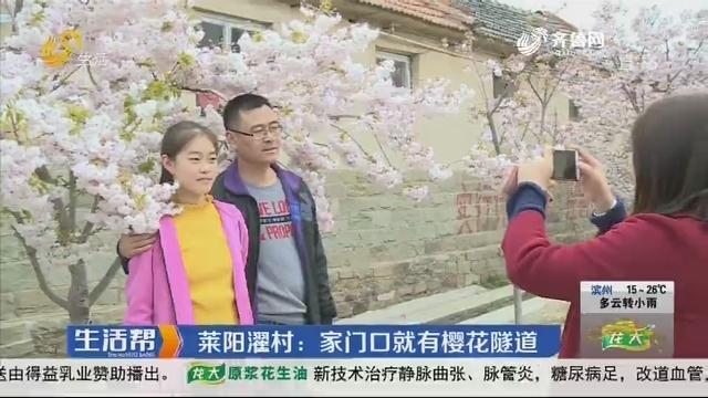 莱阳濯村:家门口就有樱花隧道