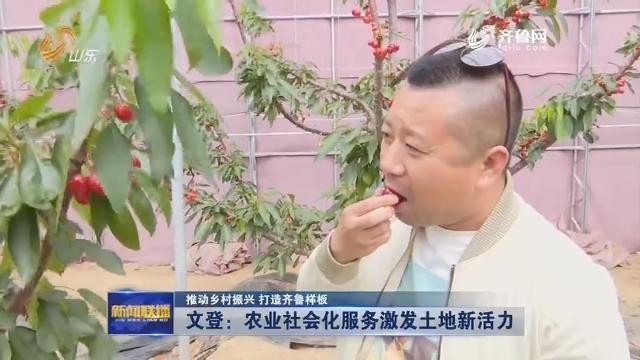 【推动乡村振兴 打造齐鲁样板】文登:农业社会化服务激发土地新活力