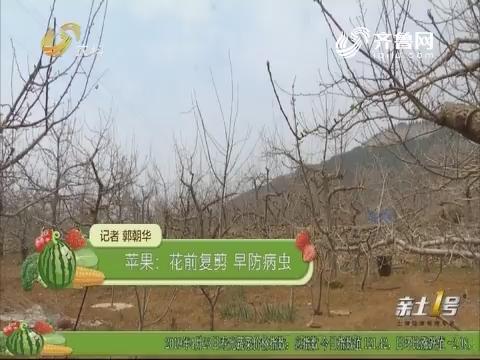 【农技一点通】苹果:花前复剪 早防病虫