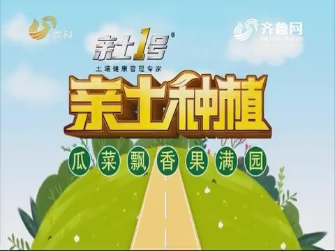 2019年04月23日《亲土种植·瓜菜飘香果满园》完整版