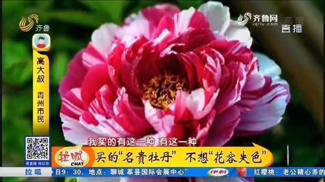 """青州:买的""""名贵牡丹"""" 不想""""花容失色"""""""