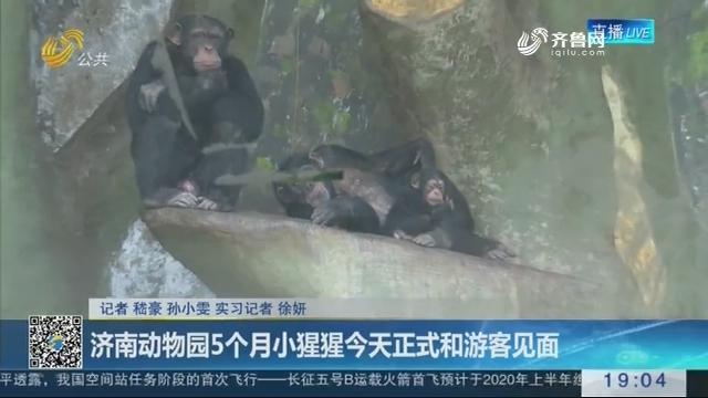 济南动物园5个月小猩猩4月24日正式和游客见面