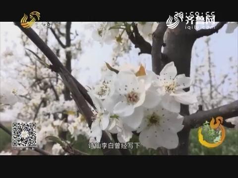 20190424《旅游365》:一日看尽滨州花