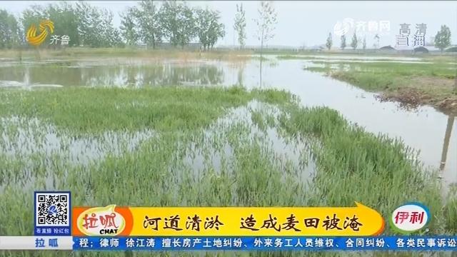 茌平:河道清淤 造成麦田被淹