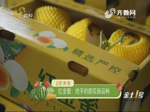 红金蜜:抢手的甜瓜新品种