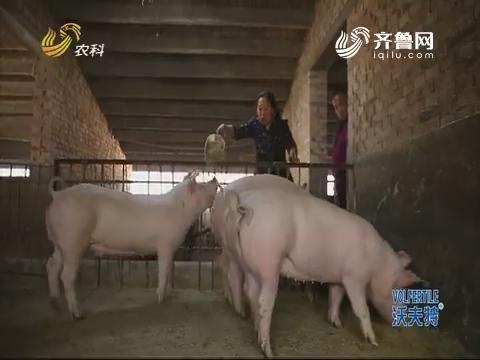 夫妻俩辞职回村 只为养出吃草猪