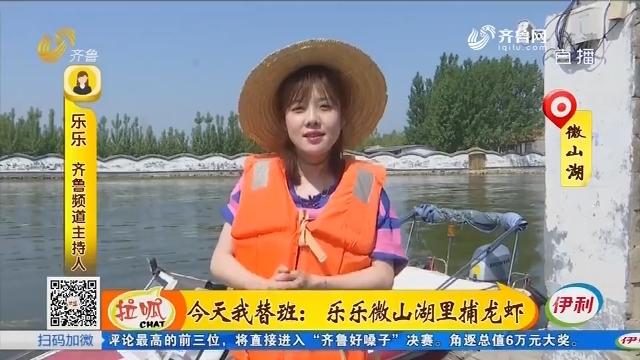今天我替班:乐乐微山湖里捕龙虾