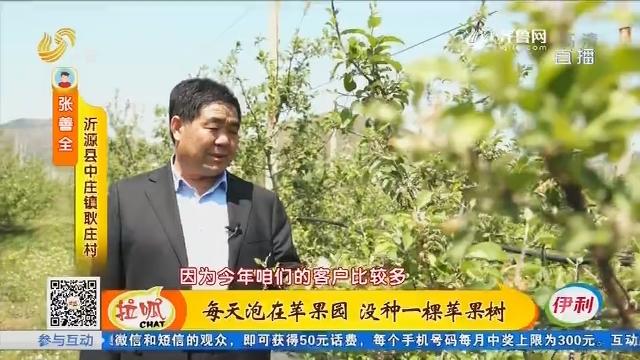 沂源:每天泡在苹果园 没种一棵苹果树