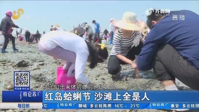 青岛:红岛蛤蜊节 沙滩上全是人