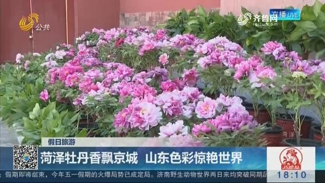 【假日旅游】菏泽牡丹香飘京城 山东色彩惊艳世界