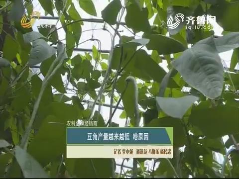 【农科金牌经销商】豆角产量越来越低 啥原因