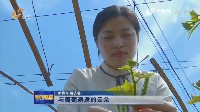 【新青年 耀齐鲁】与葡萄邂逅的云朵