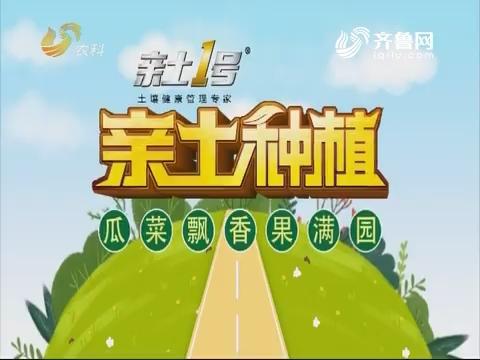 2019年05月06日《亲土种植·瓜菜飘香果满园》完整版