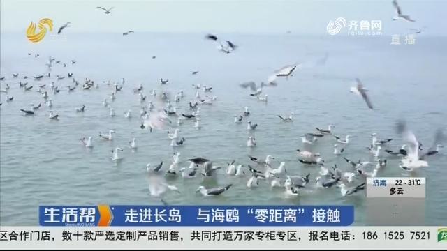 """走进长岛 与海鸥""""零距离""""接触"""
