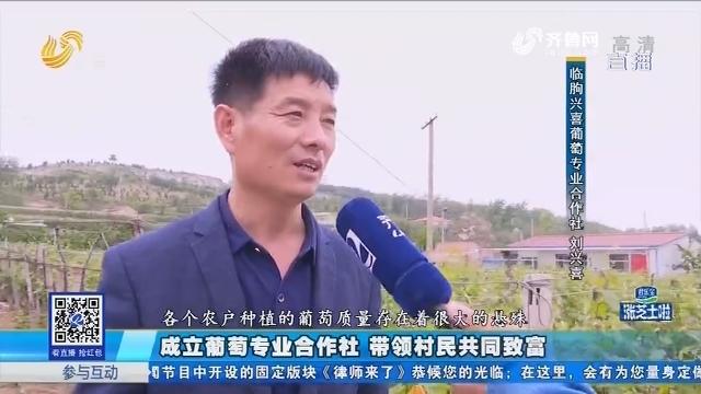 临朐:成立葡萄专业合作社 带领村民共同致富