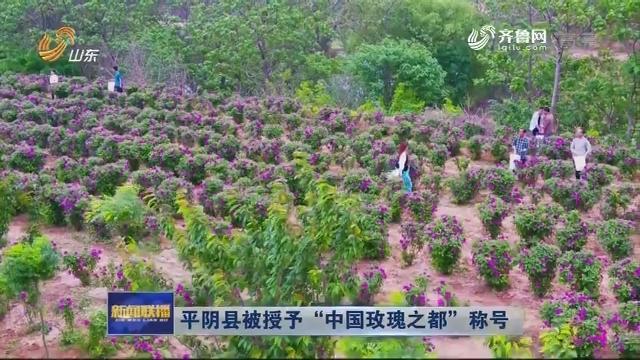 """平阴县被授予""""中国玫瑰之都""""称号"""