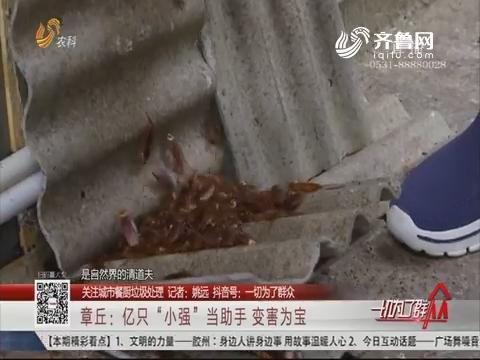 """【关注城市餐厨垃圾处理】章丘:亿只""""小强""""当助手 变害为宝"""