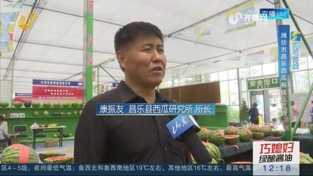 【闪电连线】中国好西瓜擂台赛在昌乐开幕