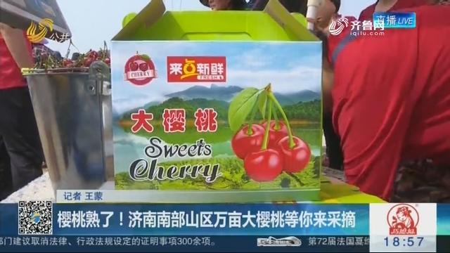 樱桃熟了!济南南部山区万亩大樱桃等你来采摘