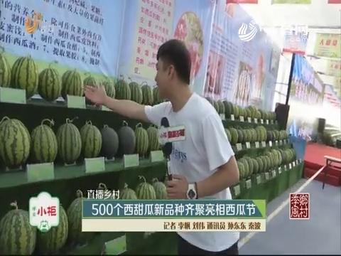 【直播乡村】500个西甜瓜新品种齐聚亮相西瓜节