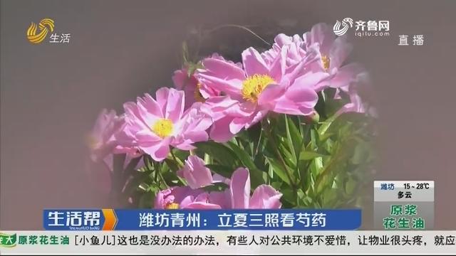 潍坊青州:立夏三照看芍药