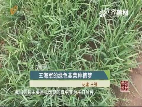 【田园追梦人】王海军的绿色韭菜种植梦