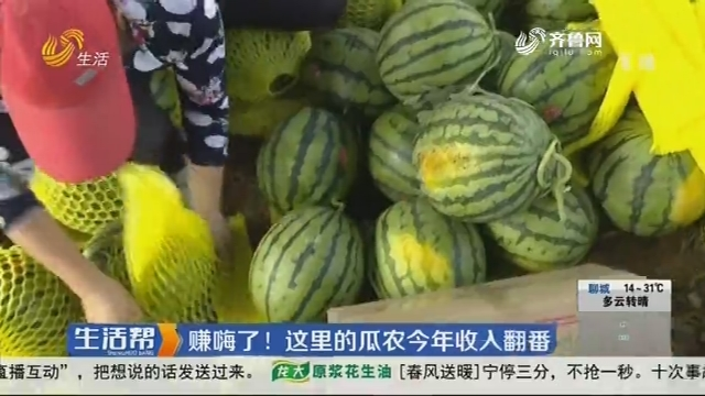 聊城:赚嗨了!这里的瓜农今年收入翻番
