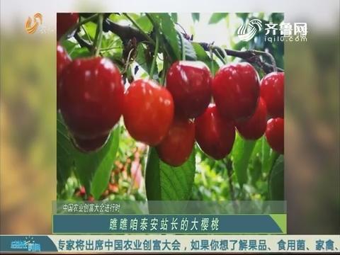 20190519《总站长时间》:中国农业创富大会进行时——瞧瞧咱泰安站长的大樱桃