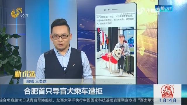 【新说法】合肥首只导盲犬乘车遭拒