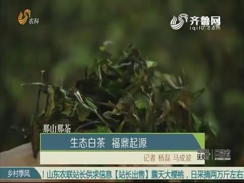 【那山那茶】生态白茶 福鼎起源