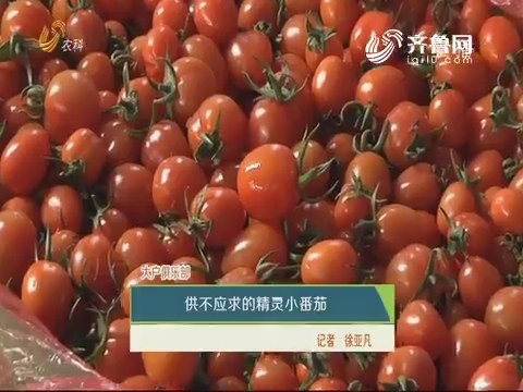 【农科大户俱乐部】供不应求的精灵小番茄