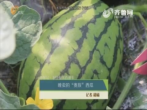 """【小螺号·农技服务直通车】晚卖的""""贵族""""西瓜"""