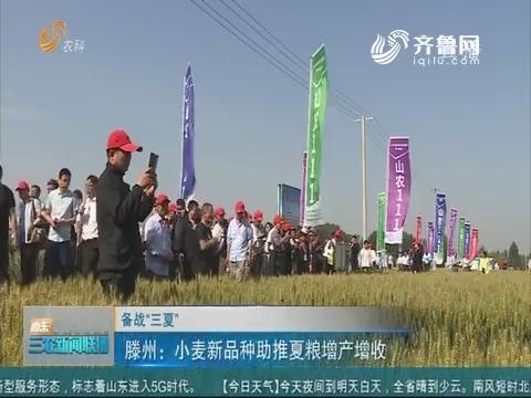 """【备战""""三夏""""】滕州:小麦新品种助推夏粮增产增收"""
