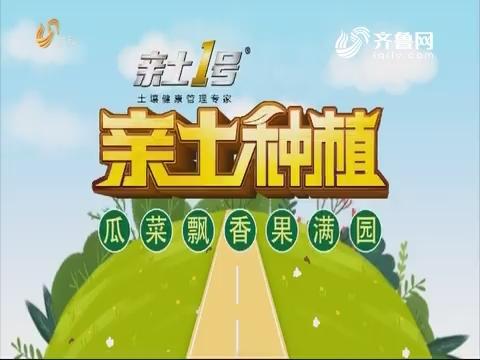 2019年05月24日《亲土种植·瓜菜飘香果满园》完整版