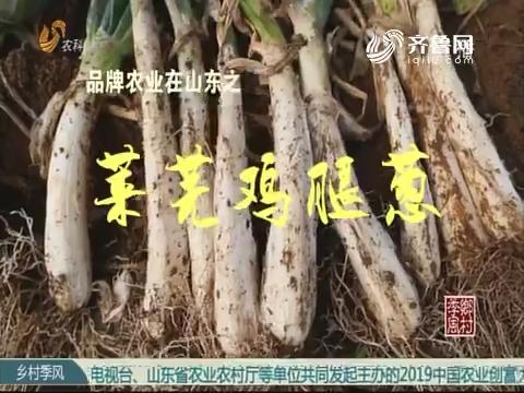 品牌农业在山东之莱芜鸡腿葱
